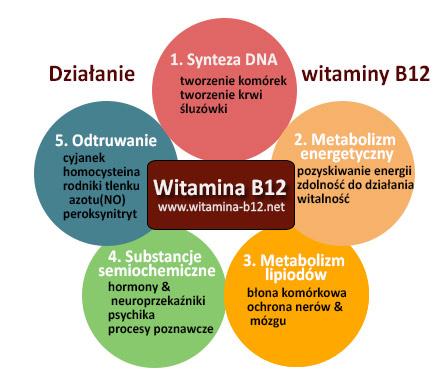 dzialanie-witaminy-b12